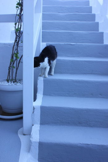 Cat on the stairs Cat Cat On The Stairs Curious Cat Early Morning Fira Santorini