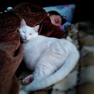 На страже моего сна🐱 котэ Цыпа хозяинспитслужбаидет беляш