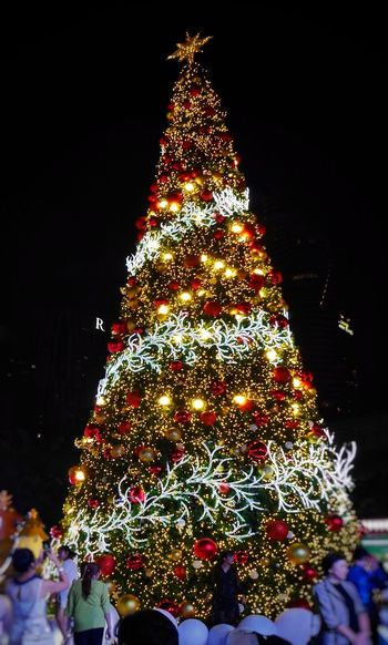 Illuminated christmas tree at night