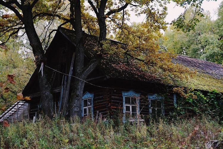 Architecture Built Structure Tree Building Exterior House No People Outdoors Day Nature Growth Branch Beauty In Nature Sky Autumn Collection Autumn 2017 Autumn Leaves Autumn Colors Beauty In Nature House Old Buildings Old House Village House Countryside Country Life