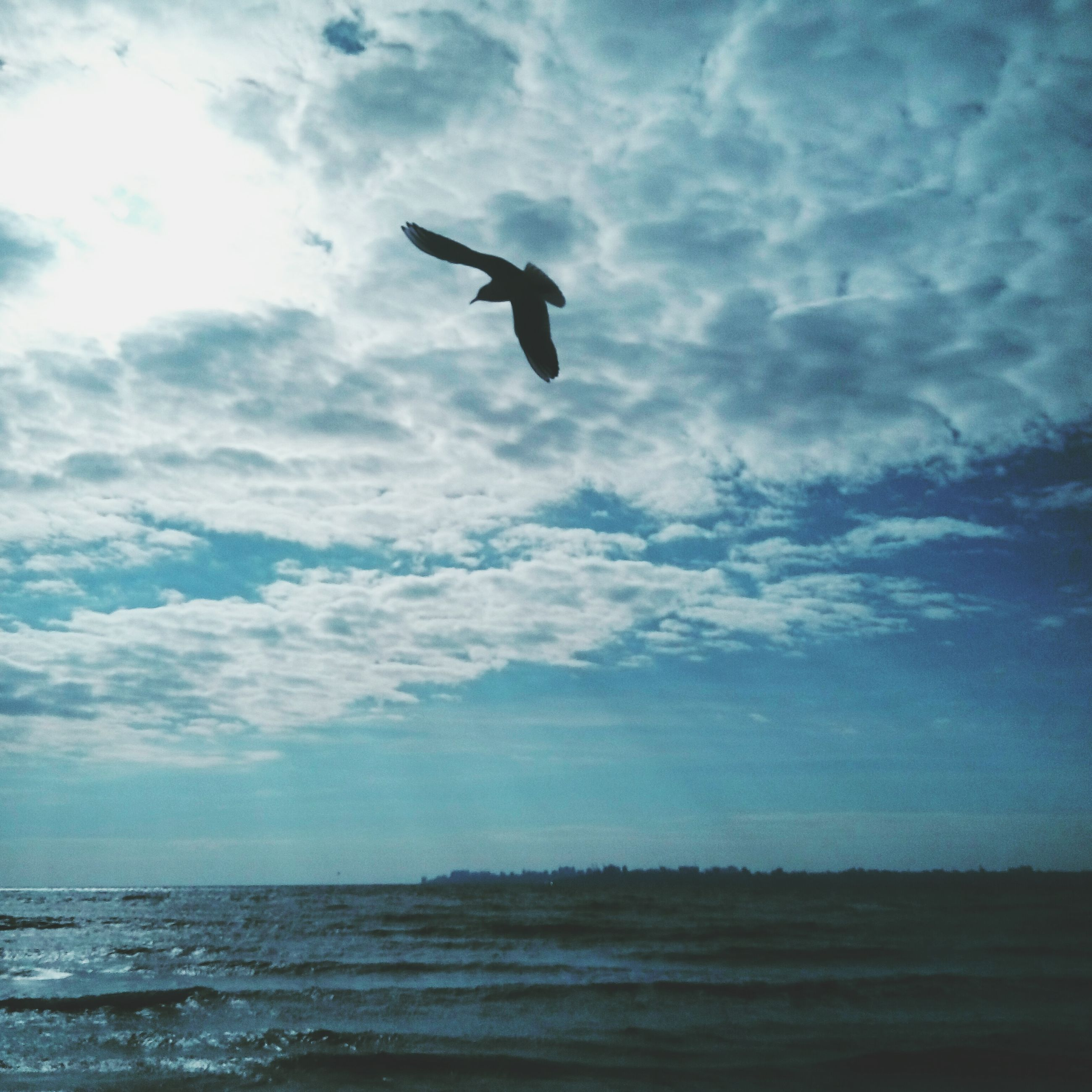 cloud - sky, sea, sky, flying, scenics, bird, nature, low angle view, animal themes, beauty in nature, animals in the wild, no people, day, water, outdoors, horizon over water, one animal, tranquility, tranquil scene, beach