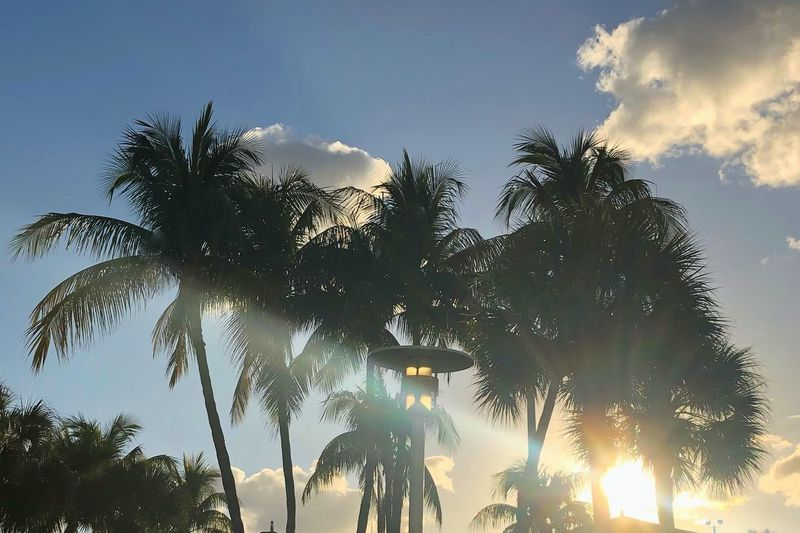 🌴💕 Sunset Picoftheday Nature Travel Beauty In Nature Palm Tree Sky Plant Tree Low Angle View Cloud - Sky Growth Nature Sunlight Beauty In Nature No People Tranquility Day Sunbeam Outdoors Sun Lens Flare Tranquil Scene Silhouette Green Color Back Lit