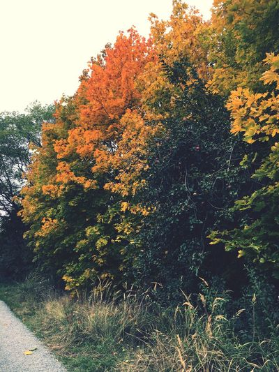 Tree Autumn No People Nature Beauty In Nature Sky Change First Eyeem Photo