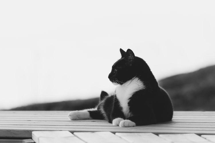 Cat sitting on a wood