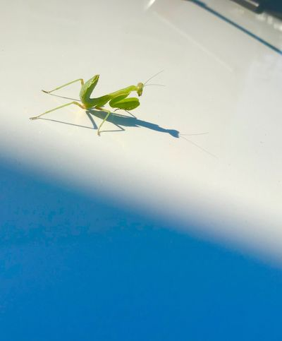 Invertebrate Insect Animal Animal Themes Animal Wildlife Animals In The Wild One Animal Green Color Beauty In Nature EyeEmNewHere