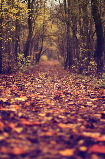 Secret Path To The Dark Forest New Autumn Background Beauty In Nature Blurry Change Close Up Close-up Covering Day Defocused Dry Forest Ground Leaf Maple Maple Leaf Nature No People Oringe Outdoors Photo Photocats  Selective Focus Soft Tree