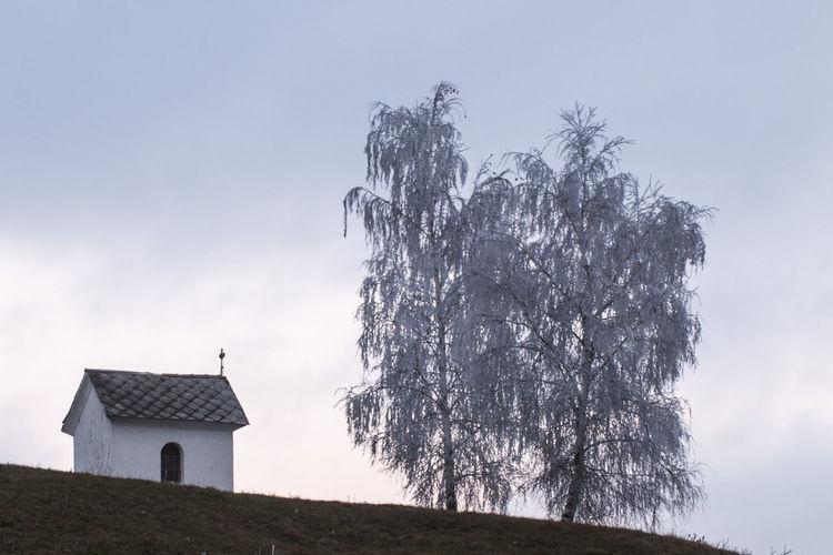 House amidst trees on field against sky