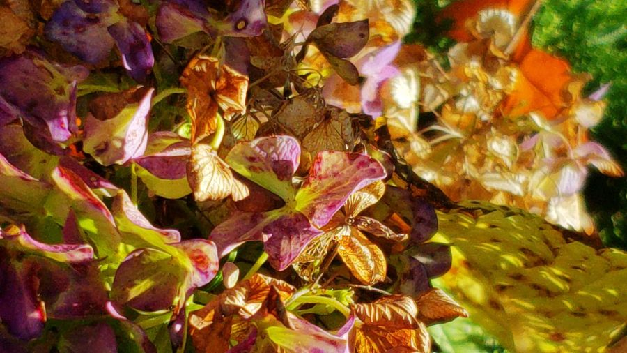 Leaf Autumn Change Close-up