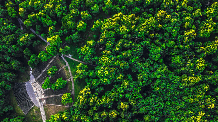 Aerial View Architecture Beauty In Nature Built Structure Day Forest Green Color Growth High Angle View Land Nature No People Outdoors Plant Rainforest Scenics - Nature Tree