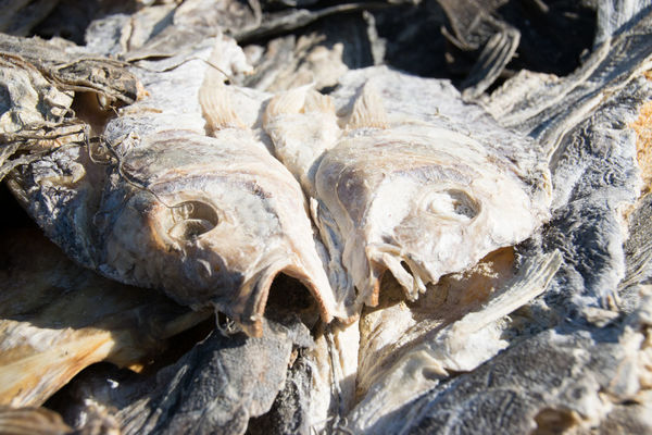 Africa Close-up Dried Fish  Fish Food High Angle View Luangwa Outdoors Zambia