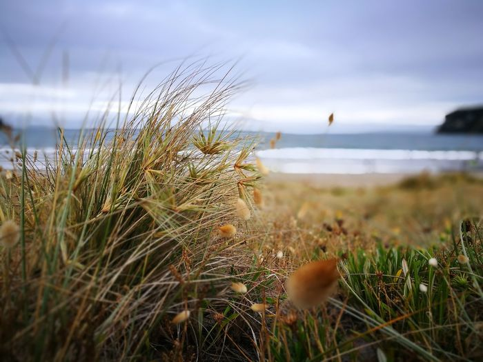 Beach Beauty In Nature Close-up Day Grass Horizon Over Water Nature No People Outdoors Sea Sky Tranquil Scene Tranquility Water