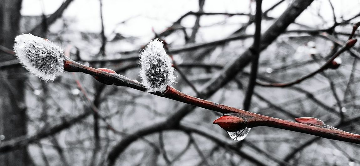 Natural Beauty Tadaa Community OpenEdit Spring Has Arrived EyeEm Nature Lover EyeEm Cold Temperature Naturelovers Enjoying Nature Nature Photography Nature On Your Doorstep Frosty Morning Nature Spring Frosty Flower Simplicity