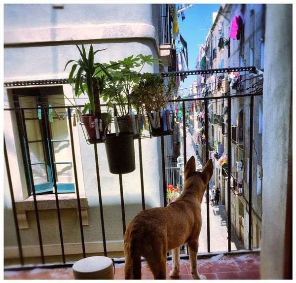 Pets Architecture Balcony Puppy Home Furry Friend Four Legged Friend Dogphotography El Raval