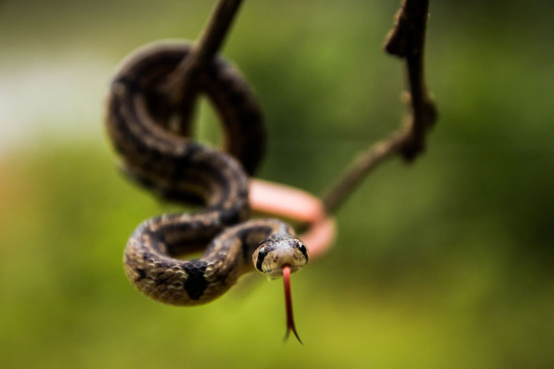Animal Themes Animals In The Wild Close-up Day Focus On Foreground Insect Nature No People One Animal Outdoors Reptile Photography Tendril