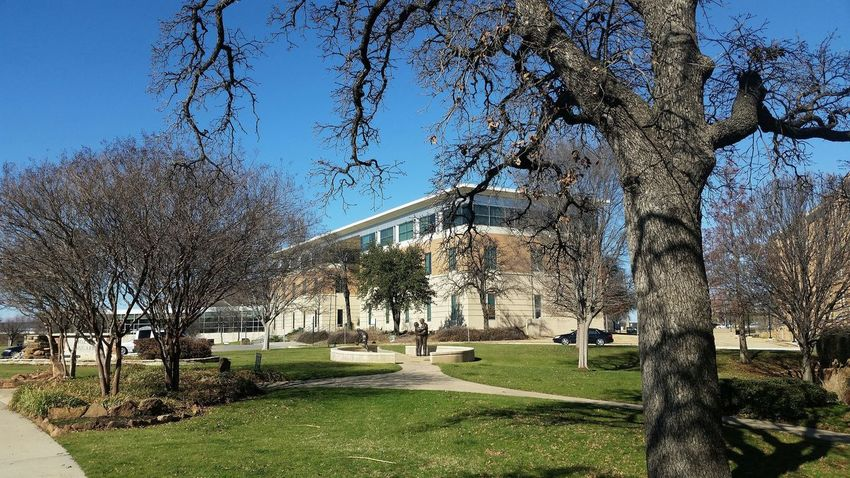 Architecture Bare Tree Branch Clear Sky Denton, Texas Grass Growth Nature No People Outdoors Sky Sunlight Tree University Of North Texas UNT