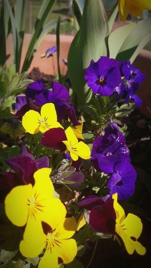Fleurs Jaune🌻 Violet Flowers