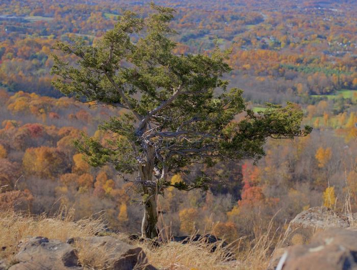 Born alone Tree Plant Day Environment Autumn Nature Land Landscape Scenics - Nature Beauty In Nature No People Outdoors Non-urban Scene Tranquility Tranquil Scene Alone On The Cliff On Top Of One Among All