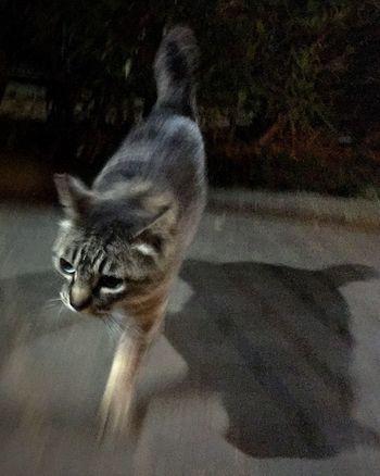 Stray Cat 野良猫 夜ねこ 走り猫
