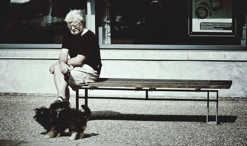 Dog Lover Sitting On A Bench What Are You Thinking About? Summer In Denmark The Human Condition