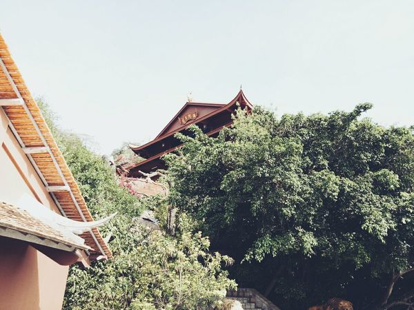 Outdoors Day Tradition Tree Architecture Roof Low Angle View Built Structure Sky Only Women People Building Exterior Nature Travel Pagoda Cultures No People Nature Roof Architecture