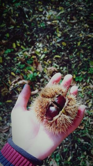 #Lastyear #autumn #chestnut #leaves #colored #forest #Walk #Nature  #Hand #October2017 First Eyeem Photo