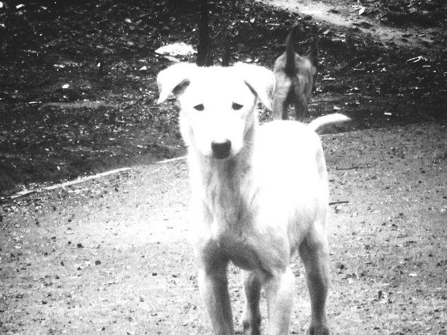 Dog Animal Outdoors Black And White FUZZ