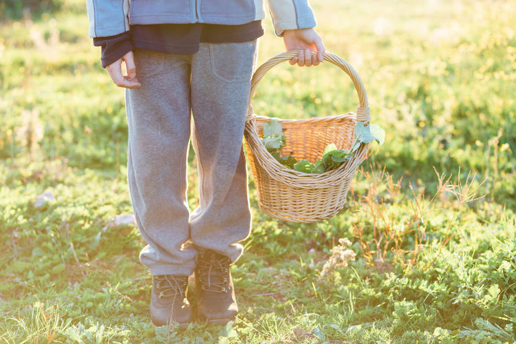 Low Section Of Boy Standing With Vegetable Basket On Field