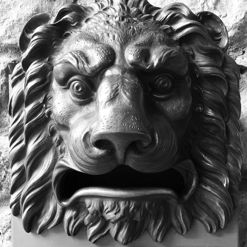 Roar Lion Cool Hi! The Architect - 2016 EyeEm Awards