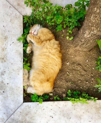 Straycat sleeping 💤 cute Cat Animal Themes Domestic Cat Feline One Animal Animal Mammal Green Color No People Relaxation