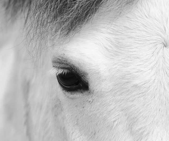 Bart Horse Eye Lashes Horse Eye Horse Photography  Body Part Human Body Part Close-up One Person Eye Pattern Real People Animal Eye Portrait Nature