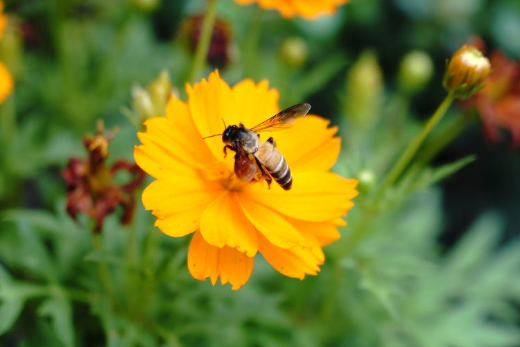 Animal Themes Animal Wildlife Animals In The Wild Beauty In Nature Bee Blooming Buzzing Close-up Day Flower Flower Head Fragility Freshness Green Color Growth Insect Nature No People One Animal Outdoors Petal Plant Pollination Yellow