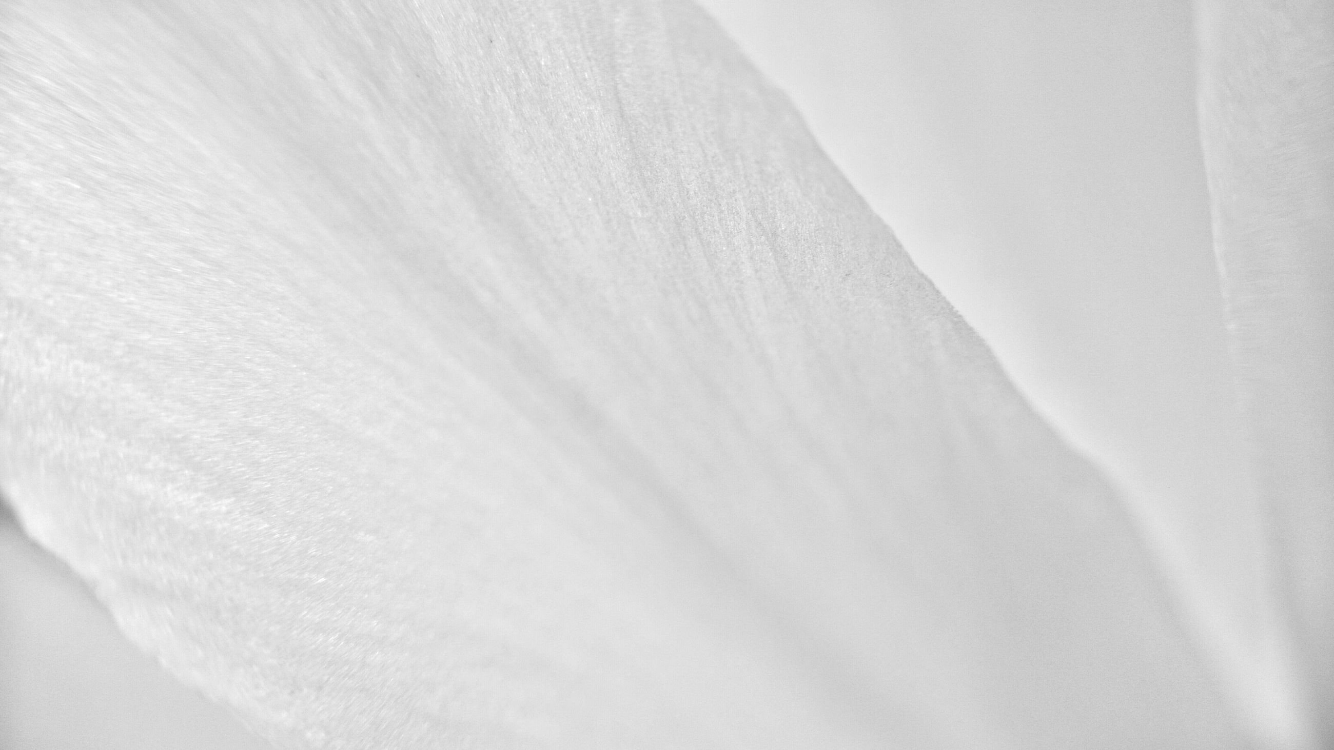 full frame, backgrounds, white color, white, textured, indoors, no people, beauty in nature, nature, close-up, pattern, softness, day, copy space, textile, natural pattern, covering, detail, tranquility