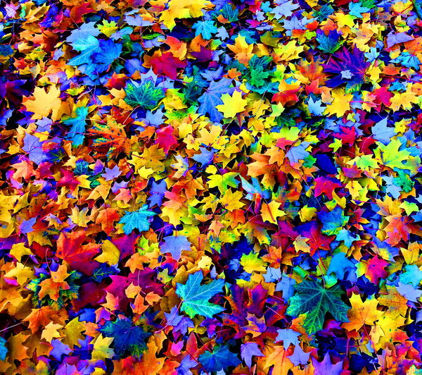 Multi Colored Backgrounds Full Frame Vibrant Color Abstract No People Close-up Day Powder Paint Indoors
