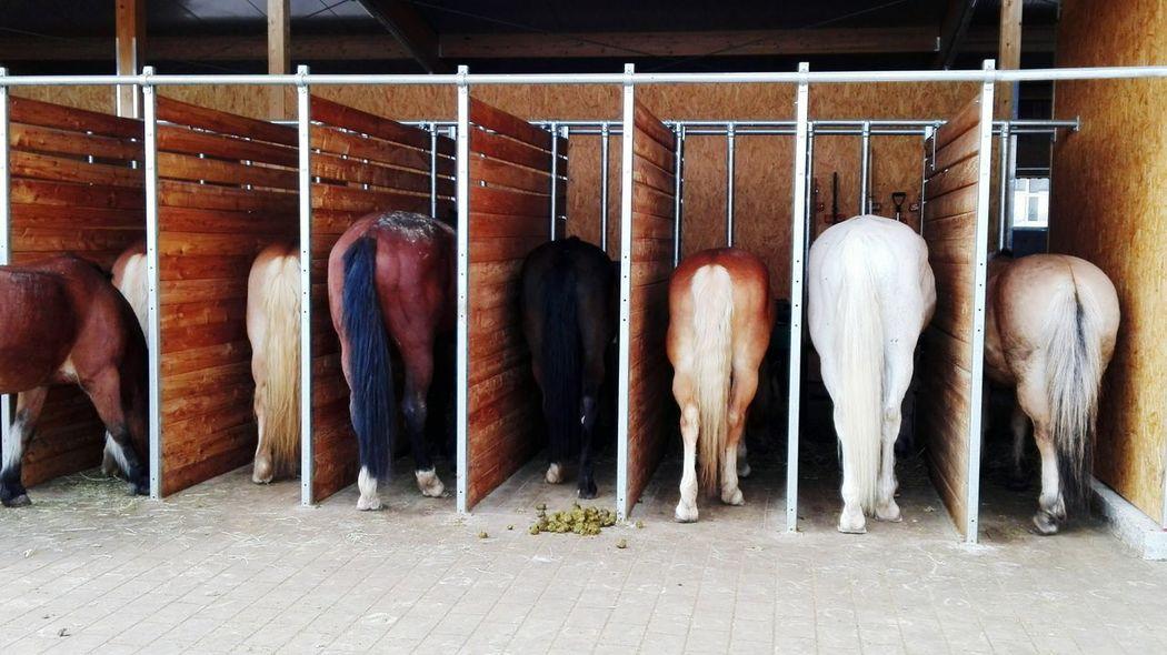 Pferde Pferdebilder Rückenansicht Horses Tiere/Animals Horse Life Horses Horses Horses Reitstall Futter Fütterung  Futterzeit Backside Schweif