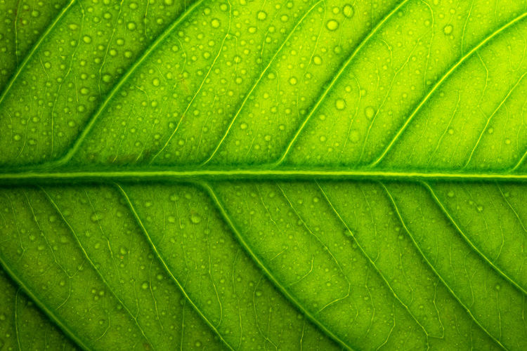 Green leaf background Abstract Abstract Backgrounds Backgrounds Close-up Dew Drop Freshness Full Frame Green Color Growth Leaf Leaf Vein Leaves Natural Pattern Nature No People Outdoors Palm Leaf Pattern Plant Plant Part Rain Textured  Water Wet
