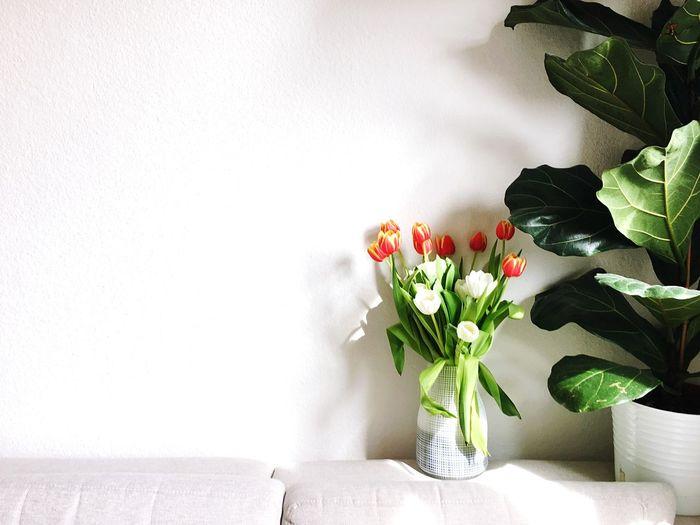 Flower vase on table against white wall