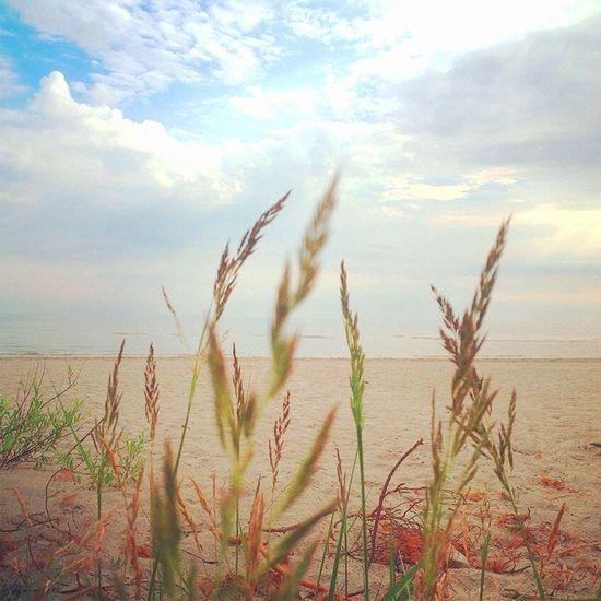 Beach Baltic Sea Walking Around Amazing View