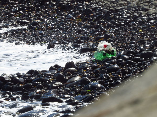 Beached Bottle Bottles Climate Change Environment Environmental Damage Environmental Issues Garbage Litter Ocean Pebble Beach Pebbles Plastic Plastic Bottle Plastic Waste Polluted Polluted Beach Pollution Pollution In My World Pollution Of The Environment Rubbish Trash Washed Up Waste Water