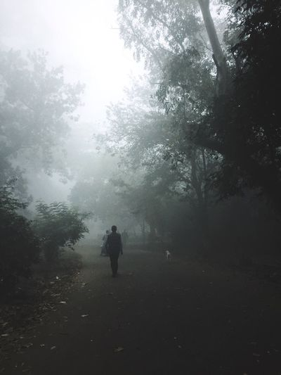 Tree Nature Full Length Walking Fog Landscape Beauty In Nature Tranquility Rear View Tranquil Scene Day Two People Outdoors Scenics Forest Men Real People Hazy  Sky People