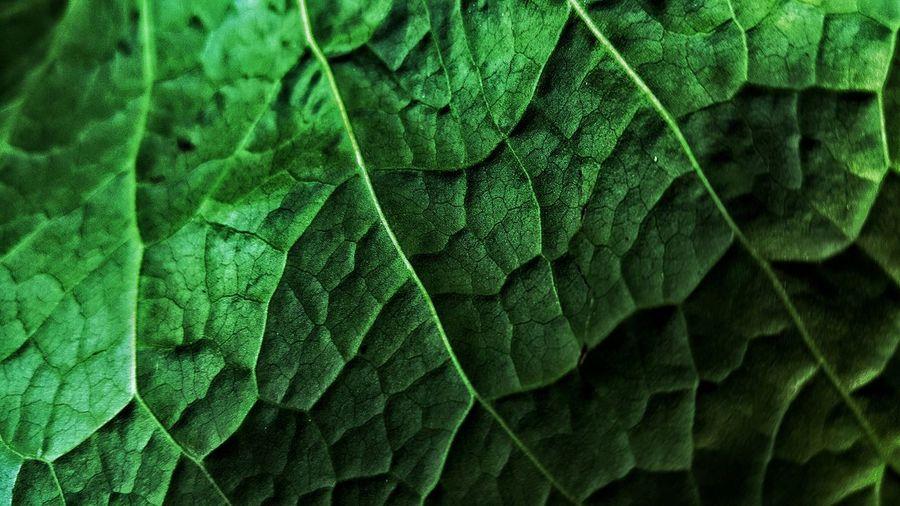 Full Frame Shot Of Fresh Leaf