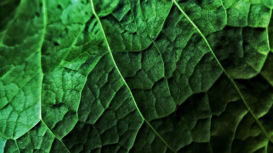 Green Green Leaves Leaf Dark Light And Shadow Nature Details Market Bestsellers June 2016 Bestsellers