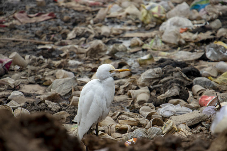 Close-up of bird perching on stones