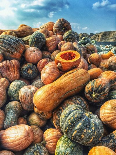 Halloween Pumpkin Patch Pumpkin Market Large Group Of Objects Abundance Day Food And Drink Backgrounds