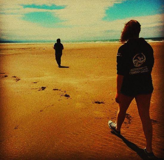 A walk to Borth. Beach Borth Nature