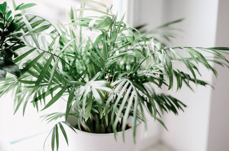 Plant Growth Green Color Leaf Nature Close-up Plant Part No People Indoors  Potted Plant Focus On Foreground Day Decoration Home Interior Beauty In Nature Tree Freshness Rosemary Houseplant Herb Poland Poland Eyeem Kaszuby Home Scandinavian Style