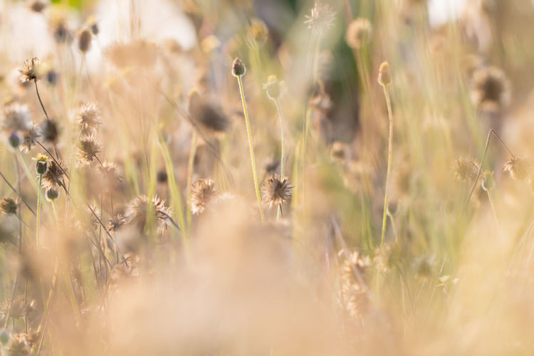 Growth Plant Selective Focus Field Land Nature Beauty In Nature Day Close-up No People Crop  Animal Themes Cereal Plant Animal Animal Wildlife Wheat Agriculture Sunlight Animals In The Wild Outdoors