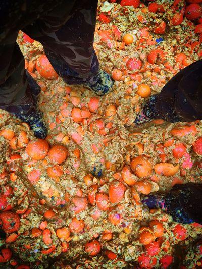 Carnival Crowds And Details Oranges Food Italian Culture No People Battle Of The Oranges Carnivale Di Ivrea