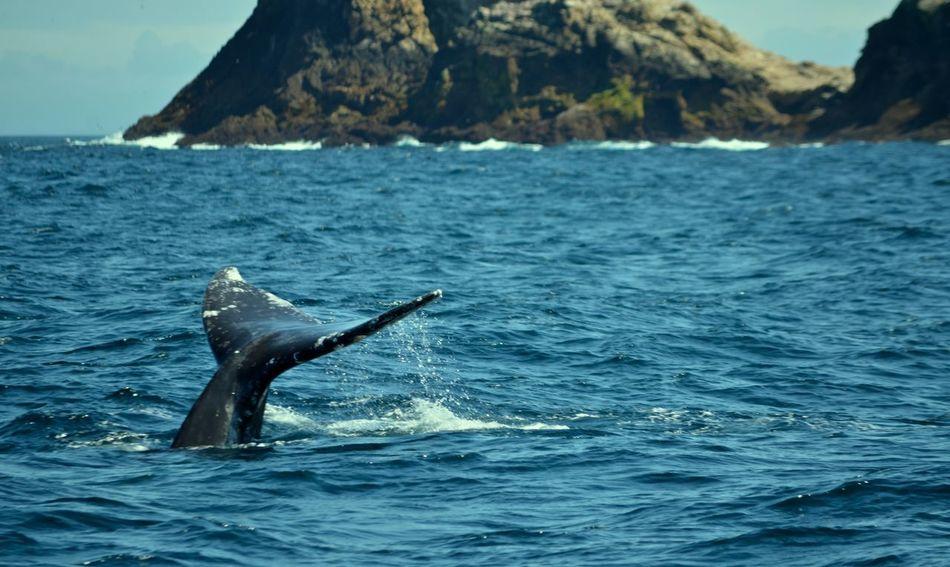 Oh hai! Farallon Pacific Ocean Whale Whale Watching