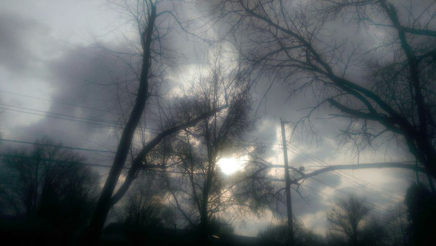 Hungarian Suicide The Purist Nature Lover Sunlight And Shadow TreePorn Overcast But Beautiful Darkness And Light Musical Photos Gloomy Sunday https://youtu.be/sjWMtQcNJXI