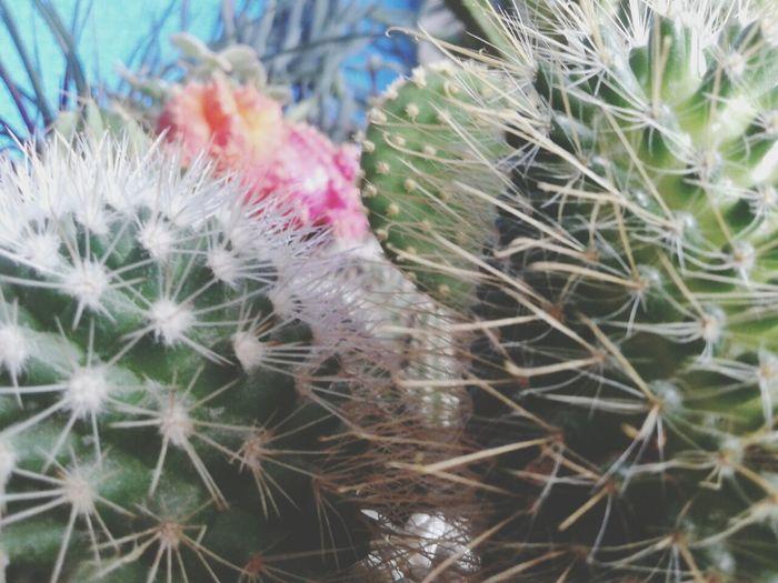 Taking Photos Nature